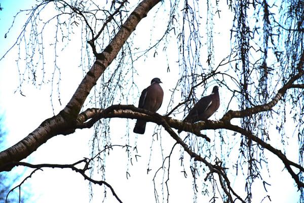To duer i et træ