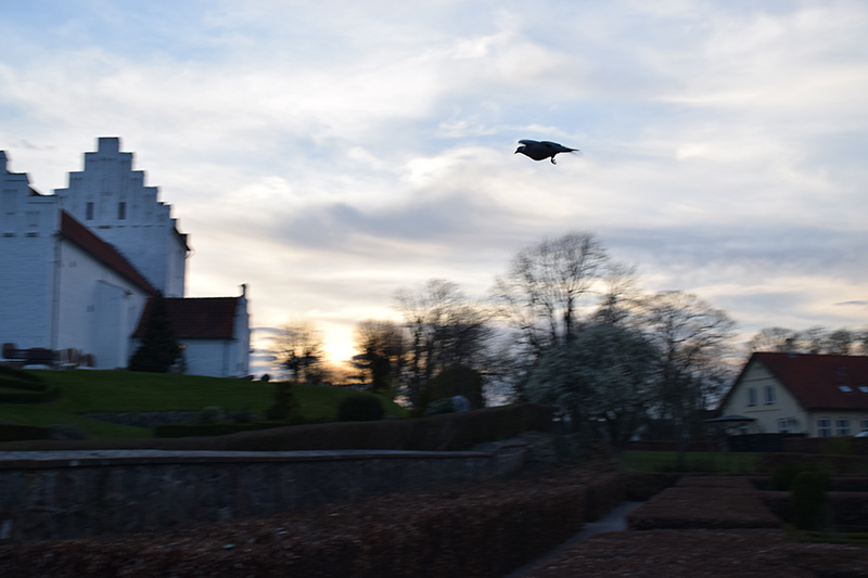 fugl-ved-kirken