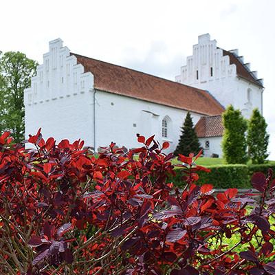 Hvalsø Kirke med rød busk ved siden af