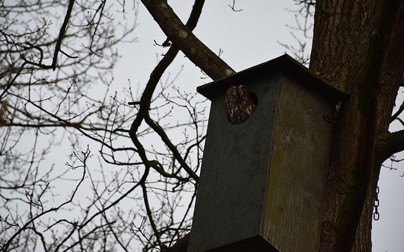 Ugle i fuglekasse