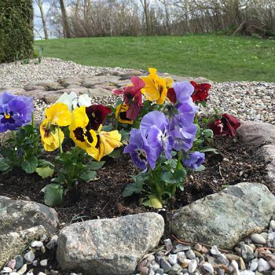 saerloese-kirkegaard-2016-blomster
