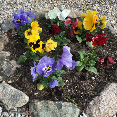 saerloese-kirkegaard-2016-blomster2