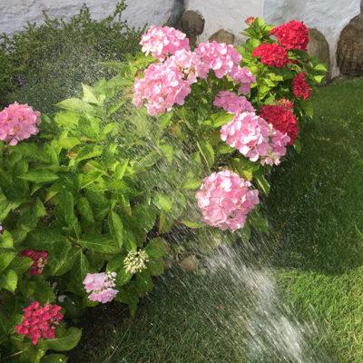 vande-blomster-1