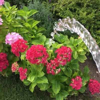 vande-blomster-4
