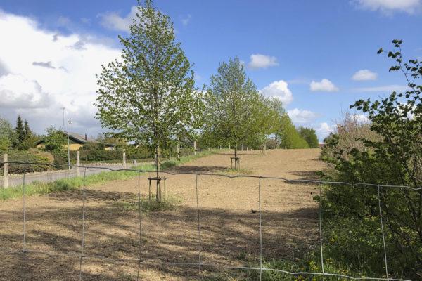 Billede af marken med træer