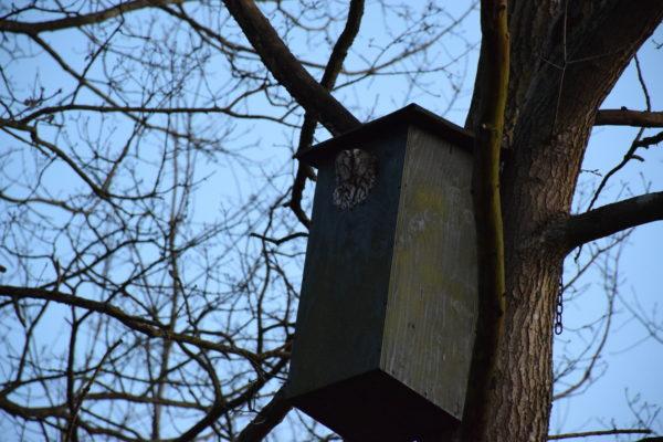Billede af ugle i fuglehus