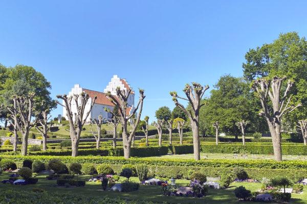 Stort billede af Hvalsø Kirke og træer taget fra Hvalsø Kirkegård